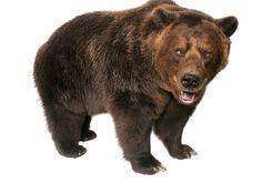 Bear white background - Google Search