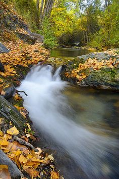 waterfall,river, water, trees,fall,leaves,flowers,yellow,floral, plants, colorful,outdoors, nature, landscape, exterior, europe, photography, fine art, autumn, river, national park, mountain, landscapes,tree,forest,