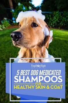 Top 5 Best Medicated Dog Shampoo for Skin and Itching Problems. Maybe your canine needs a detangling shampoo or a product for dry skin? There's a specific brand for most cases, including a best medicated dog shampoo. #dog #pets #dogs #shampoo #grooming #shopping #best #list #amazon #deals #skin #coat