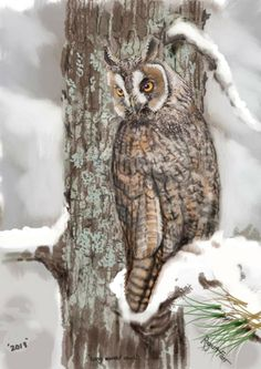 Long eared Owl, Limited edition print 1-300 Long Eared Owl, Limited Edition Prints, Bird, Stuff To Buy, Animals, Animales, Animaux, Birds, Animal