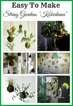 "DIY String Garden Inspiration ~ ""Kokedama"" is basically the Japanese art of enclosing a plants roots in a moss ball and suspending that plant – sort of a hanging bonsai concept. String Garden, Container Gardening, Gardening Tips, Indoor Gardening, Organic Gardening, Art Floral Japonais, Little Presents, Moss Garden, Deco Floral"