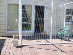 """The Very Best Gatos: La elaboración de nuestros """"Catio"""" (recinto al aire libre para nuestros gatos)"""