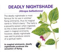 Magical herb Deadly nightshade -Pinned by The Mystic's Emporium on Etsy