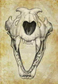 Lion Skull Drawing | Lion Skull