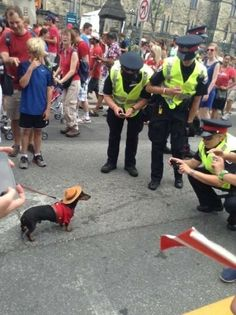 From The Chive - Royal Canadian Mounted Dachshund
