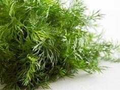 Dild - Kan gro i haven og i drivhus. Spirer hurtigt og kan sås flere gange i løbet af sommeren, da bladdilden ikke er så god, når dilden i gået i blomst. -Pynt/tilbehør til nye kartofler og fiskeretter. I kolde saucer, dressinger og i grønsagsretter. I varme retter skal dild tilsættes til sidst, for ellers forsvinder smagen.