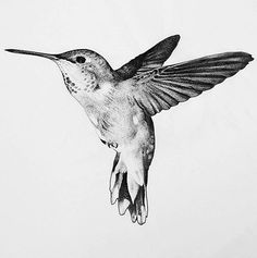 New humming bird art drawing paintings ideas Hummingbird Flower Tattoos, Hummingbird Art, Tattoo Bird, Raven Tattoo, Hummingbird Tattoo Meaning, Arm Tattoo, Word Tattoos, Cute Tattoos, Body Art Tattoos