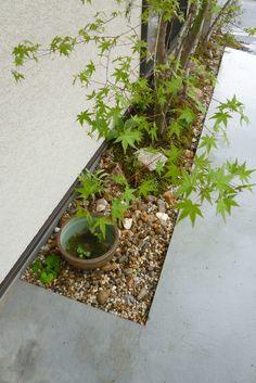 Landscape Design, Garden Design, Japanese Bathroom, Narrow Garden, Garden Entrance, Japanese Maple, Diy Garden Projects, Lawn And Garden, Backyard Landscaping