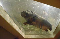 Asahiyama Zoo...oh my goodness the chub!!!