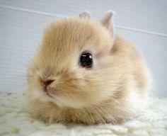 baby bunny face.