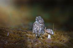 Sweet Little Pet Owl Uses Mushroom as Umbrella During Sudden Rainstorm - My Modern Met