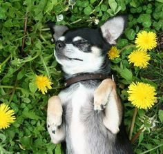 Stop and smell the flowers. :)