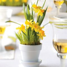 Learn how to make these potted daffodil party favors, perfect for spring celebrations, from @Taste of Home