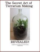 The beginners guide to making a beautiful terrarium in one hour