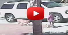 #Cats  #Cat  #Kittens  #Kitten  #Kitty  #Pets  #Pet  #Meow  #Moe  #CuteCats  #CuteCat #CuteKittens #CuteKitten #MeowMoe      AMAZING: Cat Saves Boy From Vicious Dog Attack  ...   http://www.meowmoe.com/10056/