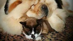 Petition · Ministre Pierre Paradis: Retirer l'appellation SPA-SPCA, à tout organisme qui utilise le gaz pour tuer les animaux. · Change.org