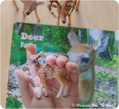 My First Book of Baby Animals (While-tailed buck, doe, fawn)
