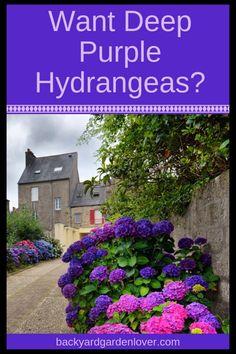 Hydrangea Color Change, Hydrangea Colors, Hydrangea Care, Hydrangea Flower, Purple Hydrangeas, Hydrangea For Shade, Beautiful Flowers Garden, Beautiful Gardens, Flowers Nature