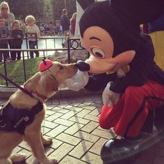 38 Puppies For Anyone Who Needs A Smile – #4. This service puppy in training giving Mickey a boop. http://www.pindoggy.com/pin/9547/
