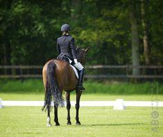 Halthouden is een belangrijke oefening, niet alleen om de duidelijke reden dat je af wilt kunnen stijgen, maar het is ook een teken dat je paard de basis g