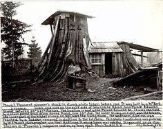 """This Vancouver house carved out of stumps in the early 1900′s:  """"…3 rooms.The lower stump on right was the kitchen, the lower part of the highter stump on the left was the living room. The bedroom, doorless, was reached by a ladder removed in daytime to the kitchen…"""" It reminds us a favorite young adult novel we've read a million times: My Side of the Mountain, about a teenager who runs away from home to live in the Catskills. He makes a cozy house out of a huge hemlock stump"""