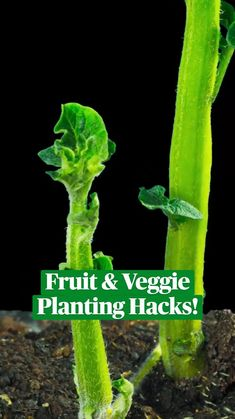 Regrow Vegetables, Container Gardening Vegetables, Planting Vegetables, Growing Vegetables, Growing Plants, Garden Yard Ideas, Lawn And Garden, Home Vegetable Garden, Plant Care