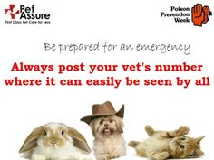 Be prepared for a pet emergency - always post your vet's number somewhere where it can easily be seen by all. If you're hiring a pet sitter, make sure s/he has the number handy.