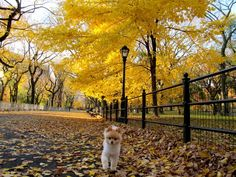 For Throwback Thursday & all the new friends, here is piece Jess & I wrote on The Mall in Autumn, Central Park.