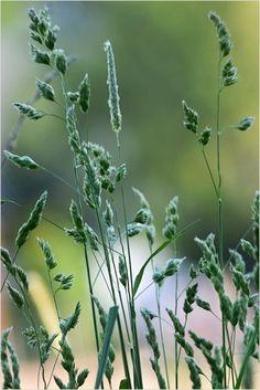 Green, green grass...