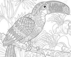 Coloring pages for adults. Budgie parrot. Adult coloring ...