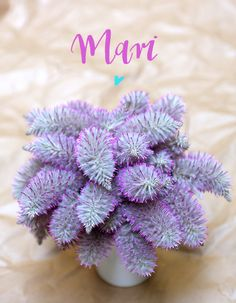 Mari <3 by HELLO calligraphy Succulents, Calligraphy, Plants, Lettering, Succulent Plants, Plant, Calligraphy Art, Hand Drawn Typography, Planets
