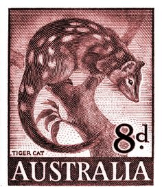 1959 Australia Tiger Cat Postage Stamp,tiger quoll,spotted-tail quoll,dasyurus,australia,outback,vintage,postage stamp,fauna,mayo,postal,ephemera,uluru,ayers,wildlife,nature,engraving,native,ozzie,native,endangered species,conservation