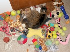 My name is Spencer and I am a forest cat from Norway. Can you find me among all these dog toys?