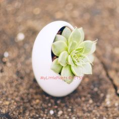 FREE SHIPPING Egg Shape White Ceramic Container by MyLittlePlants