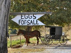 I sure wished I lived close so I could get eggs :)