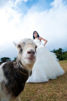 15 Goatobombs That Changed The World literally just 'lol'ed looking at all of these