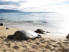 Sea Turtles (Image by E-PR)