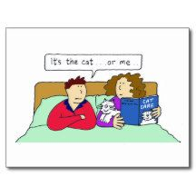 Cat or me, couple in bad, woman prefers the cat. postcard