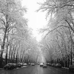 Tehran - iran / valiAsr ave