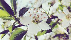 60 Beautiful #FlowersWallpapers [Wallpaper Wednesday]  Spring Flower  #FondoDeEscritorioFloral