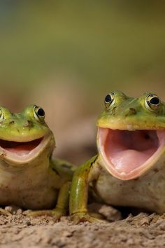 Funny pictures of animals posted every day. We're bringing you the best images of funny pets, weird and cute animals. Funny Frogs, Cute Frogs, Happy Animals, Funny Animals, Cute Animals, Smiling Animals, Laughing Animals, Happy Birthday Animals, Beautiful Creatures