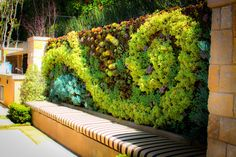 Decoration, Amazing Picture Design Living Wall Cool Green Color Leaf Good Long Chairs Good Brown Color Chairs Nice Outdoor Picture Concepts: How To Build A Living Wall With The Natural Designs Of Green Color Leaf