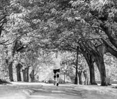 Simon Cotton - General Manager 'Run Forest Run!  Harrogate Stray'