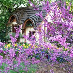 Mary Campbell's photo of Little Cottage in Spring surrounded by beautiful flowers and gardens, redbud tree. Spring garden at the country cottage, Wales. (****See Pin of larger view. Cottage Living, Cozy Cottage, Cottage Homes, Cottage Style, Cottages And Bungalows, Cabins And Cottages, Country Cottages, Storybook Homes, Storybook Cottage