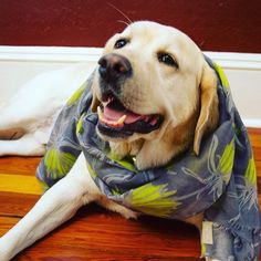Crown Imperial Scarf. Model: Timmy http://www.indiahicks.com/rep/pattywolfe/shopping/productdetail?id=15008-09&CategoryId=10&CategoryName=Accessories