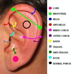The blue line on the diagram is where you will get pierced if you ask for a daith piercing. The yellow is the rook. Source: I have a daith piercing in my left ear that is halfway through healing. Ear Piercing Guide, Ear Piercing Names, Outer Conch Piercing, Ear Piercings Chart, Different Ear Piercings, Types Of Ear Piercings, Cool Piercings, Piercing Tattoo, Body Piercing