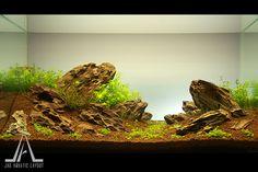 """Aquascape – """"The Rock"""" @ Jag Aquatic Layout – Gallery"""