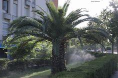 237 / 366 - Calor en Barcelona | Foto a Foto, Día a Día