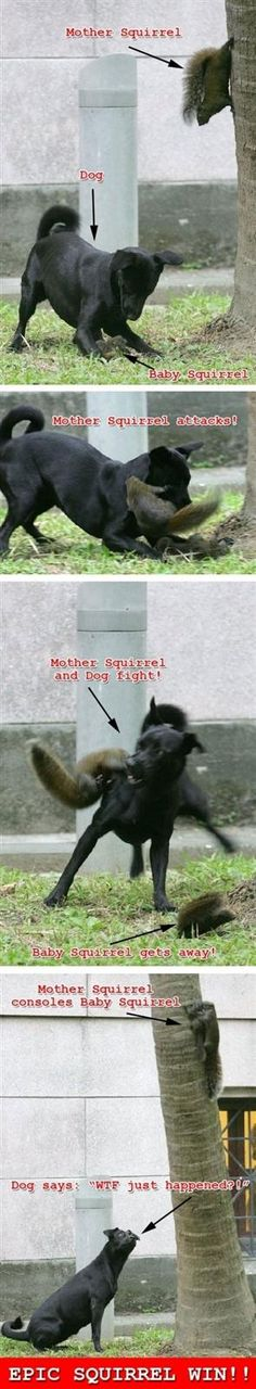 Why stand around and take pictures, when you should be helping the dog.  You don´t know what disease that squirrel has.