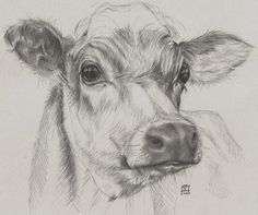 Quick drawing of a cow, donated to a charity to raise funds to feed farm animals affected by flooding. Richard Mountford Artist